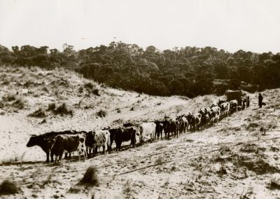 Bullock_wagon_Promontory_Road